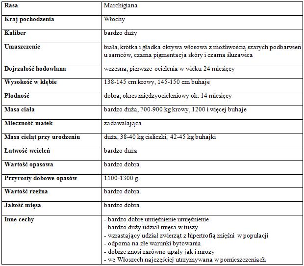 Marchigiana011